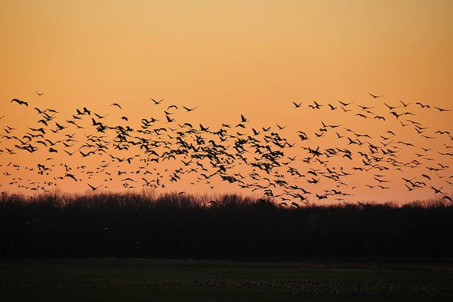 Photo courtesy of Flickr user Serge Melki
